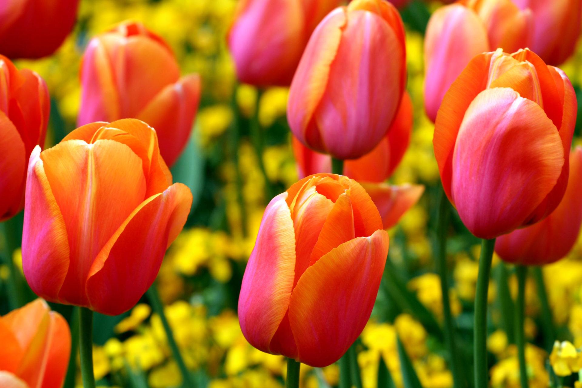 Catalogo Pasqua e Ponti Primavera 2020!